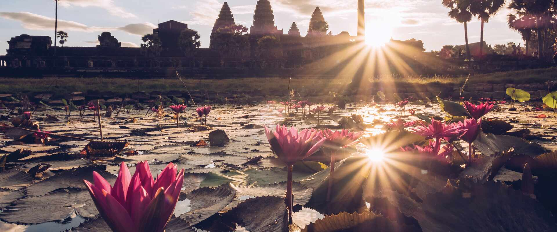 Pink lotus flower on a lake with Angkor Wat outline in the suns rays