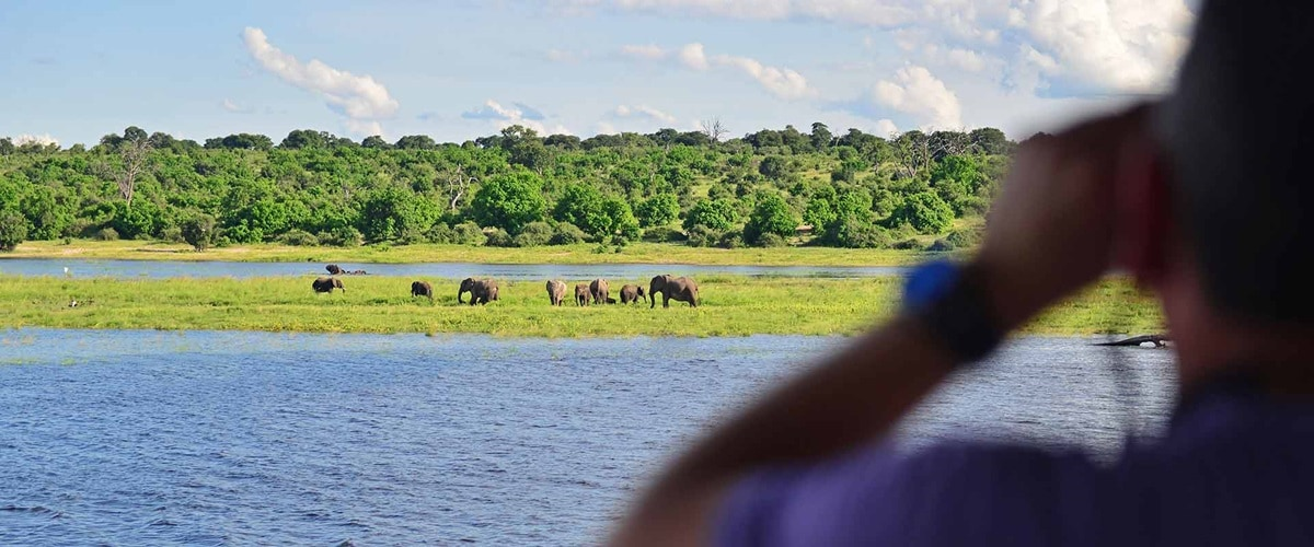 View from a boat towards a herd of elephants grazing nearby, Botswana