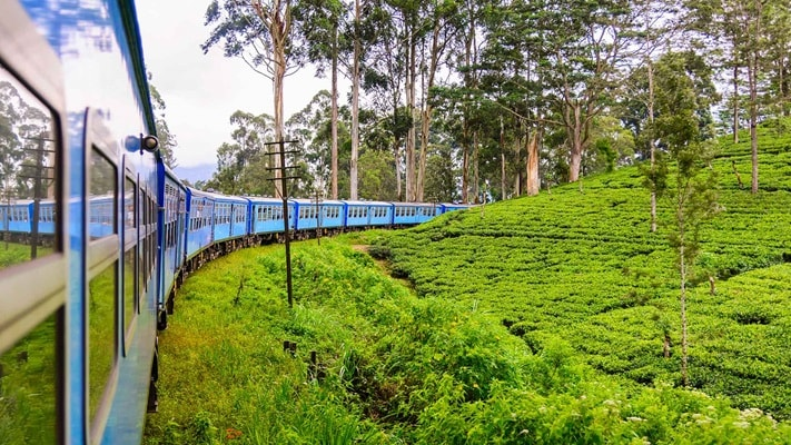 Blue train travelling through lush green tea plantations, Sri Lanka