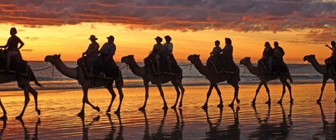 Camels in a row wandering along a beach at sunset, Broome