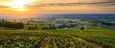 Sunset across the Beaujolais wine region, France