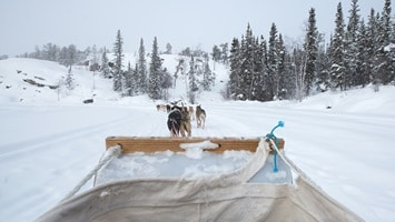 Dog sledding from the view of the driver.
