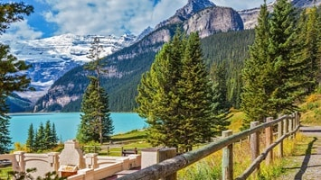Pine trees on the shores of Lake Louise with towering snow capped mountains behind